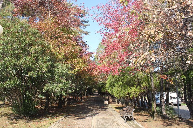 Парк имени М. В. Фрунзе. Аллея