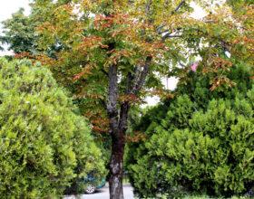 Деревья уже подготовлены к новому году