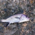 Ryba gorbyl'